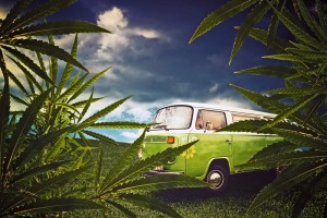 weed delivery company